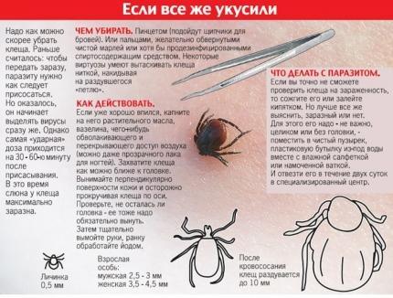 Рекомендации по защите от укусов клещей