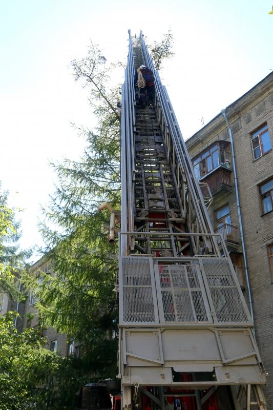 Спасатели аварийно-спасательной службы Рязанской области спасли кота Барсика, который четыре дня просидел на дереве