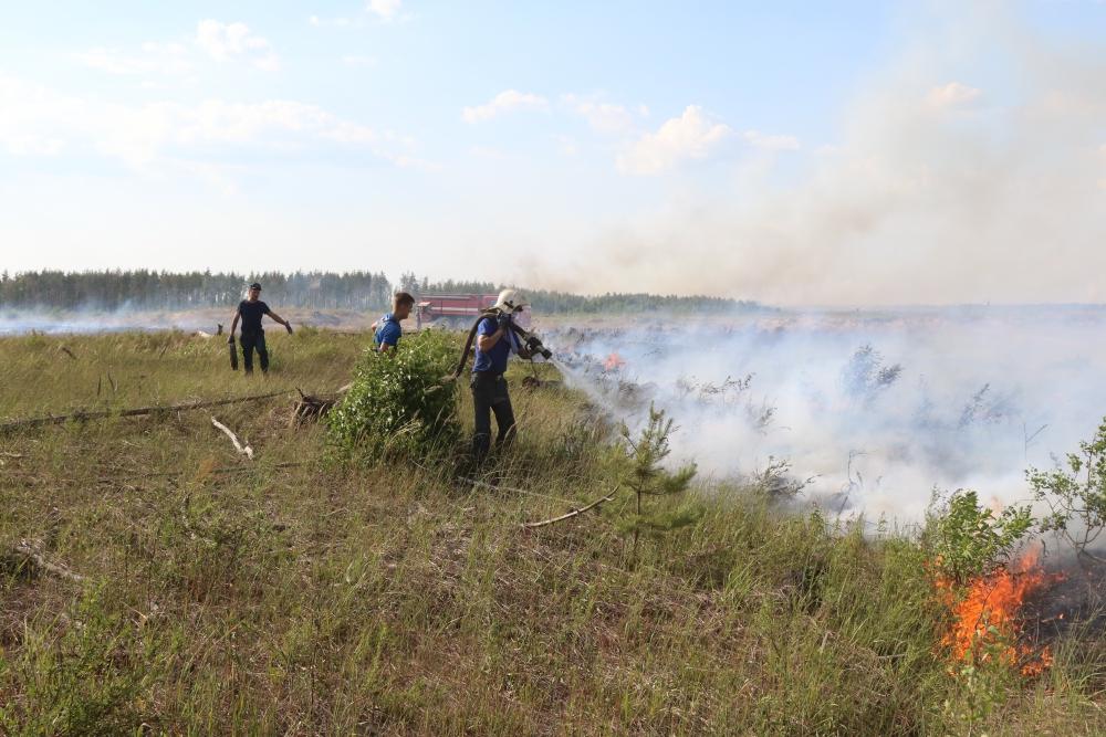 Ликвидация лесного пожара на территории Рязанской области