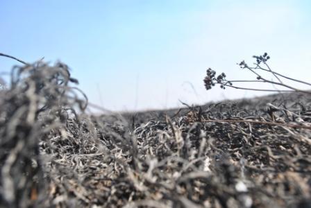 Тушение пала травы