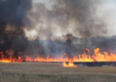 Пшеница в огне
