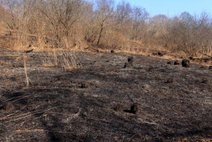 (25.03.19) Рукотворное стихийное бедствие - пал травы!