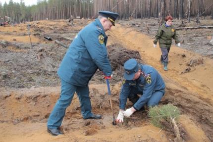 Смоленские пожарные-спасатели приняли участие в акции «Всероссийский День посадки леса»