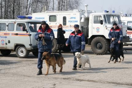 Четвероногие спасатели принимают поздравления