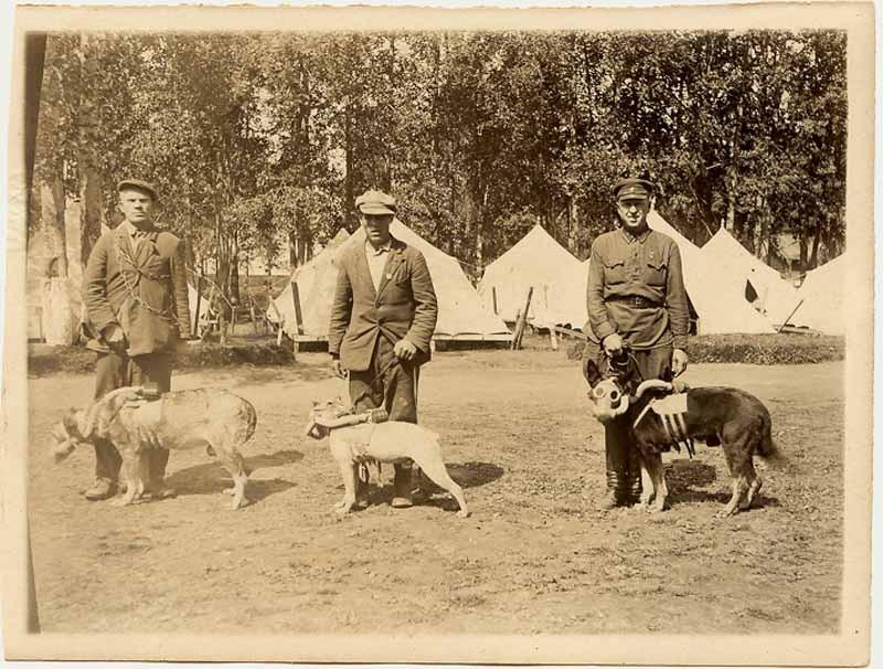 Цикл статей к 85-летию Гражданской обороны России (статья № 6): Первые средства защиты для животных – лошадей, собак