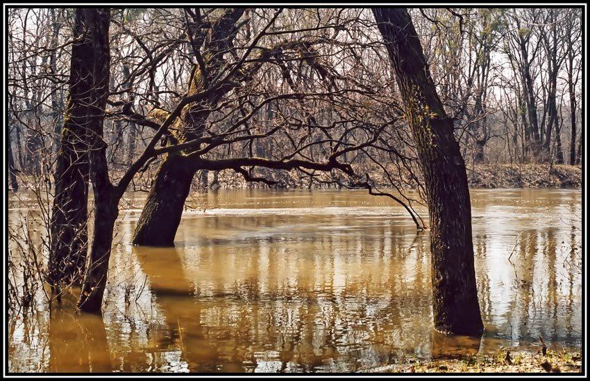 Как спастись от наводнения