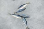 Безопасность рыбалки на льду