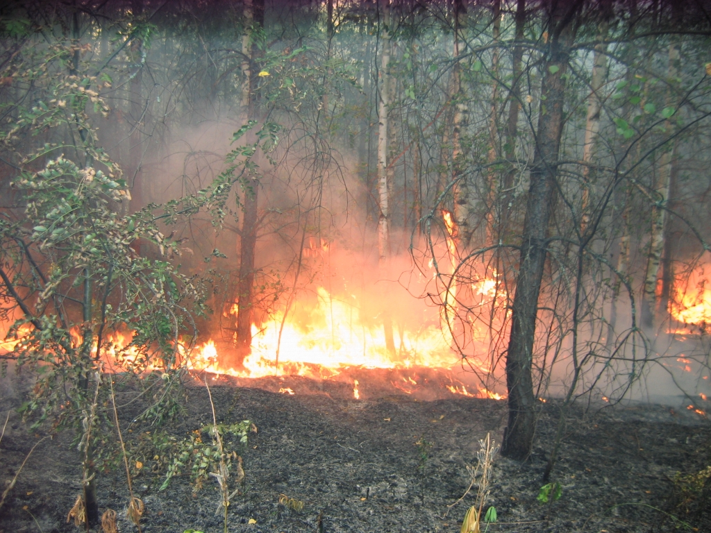 Основная причина возникновения природных пожаров -  человеческий фактор