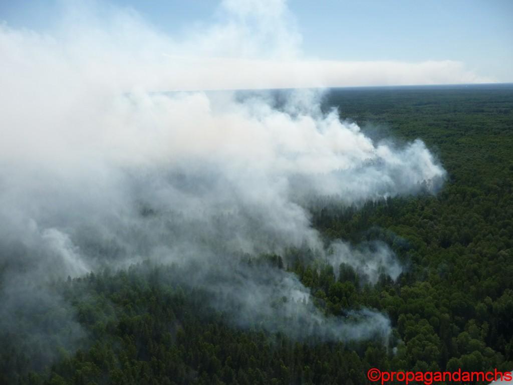 Лесной пожар в Суслонгерском военном лесничестве