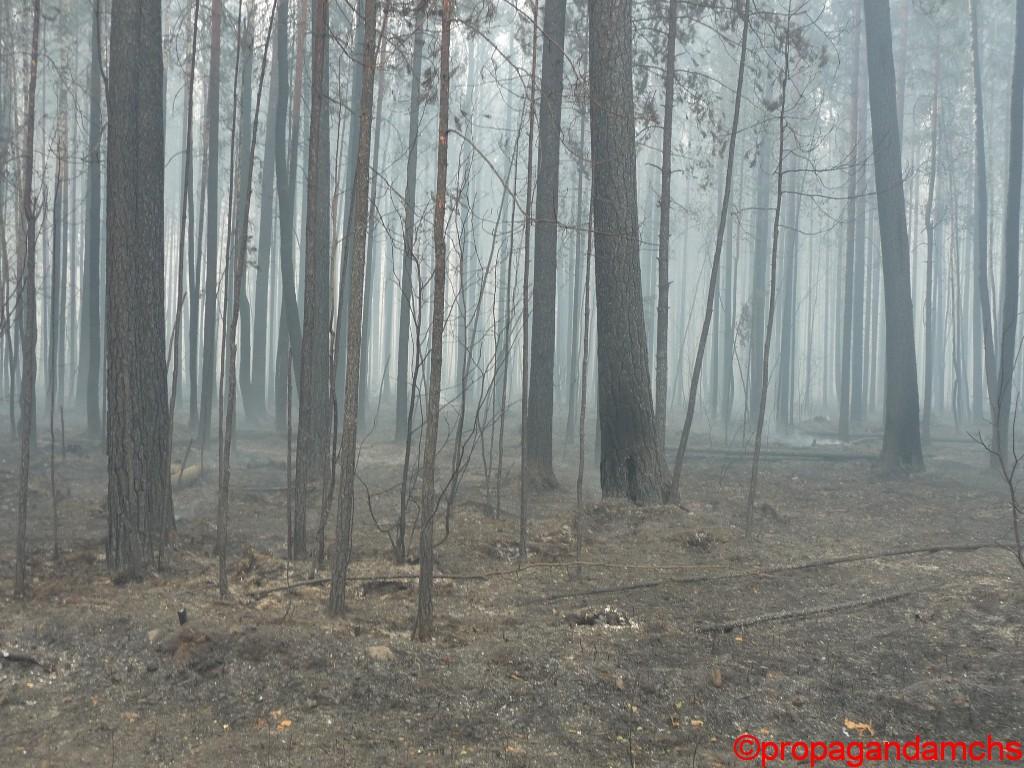 Лесной пожар в Куярском лесхозе