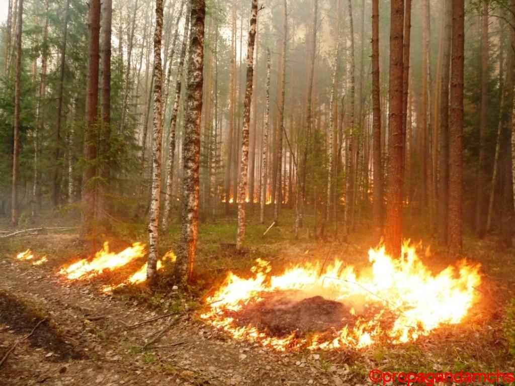 Лесной пожар в Килемарском районе