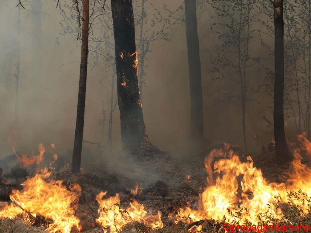 Лесной пожар на Кокшайском тракте. Район поселка Устье Кундыш.