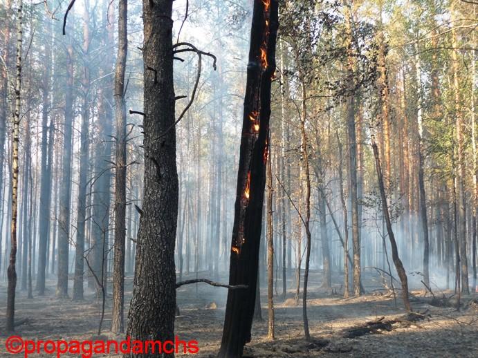 Лесной пожар 15 июня 2009 года