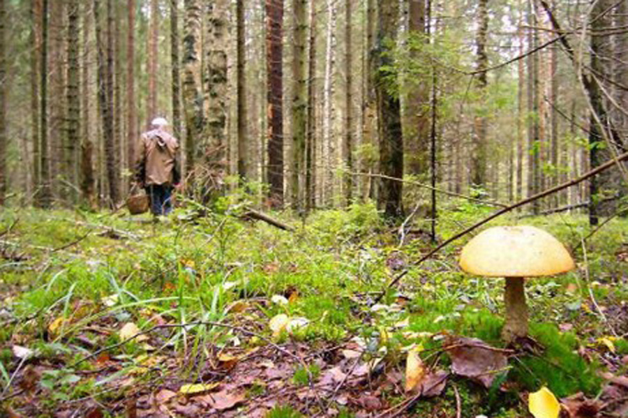 Как не заблудиться в лесу - советы специалистов