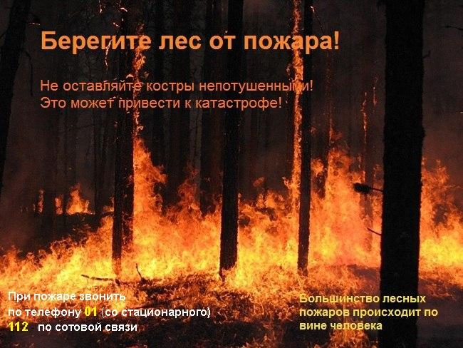 Число природных пожаров в регионе снизилось в 3,5 раза