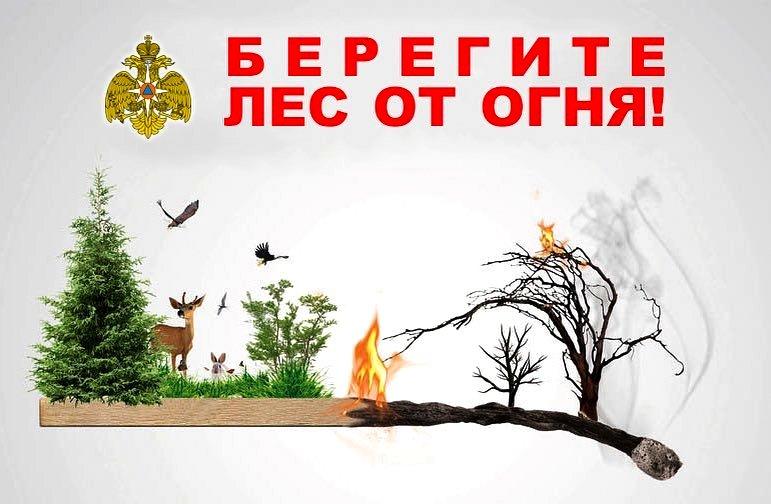 Минприроды Тувы: в Туве снизилось количество лесных пожаров в 2019 году.