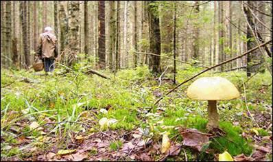 """Памятка """"Как не заблудиться в лесу"""""""