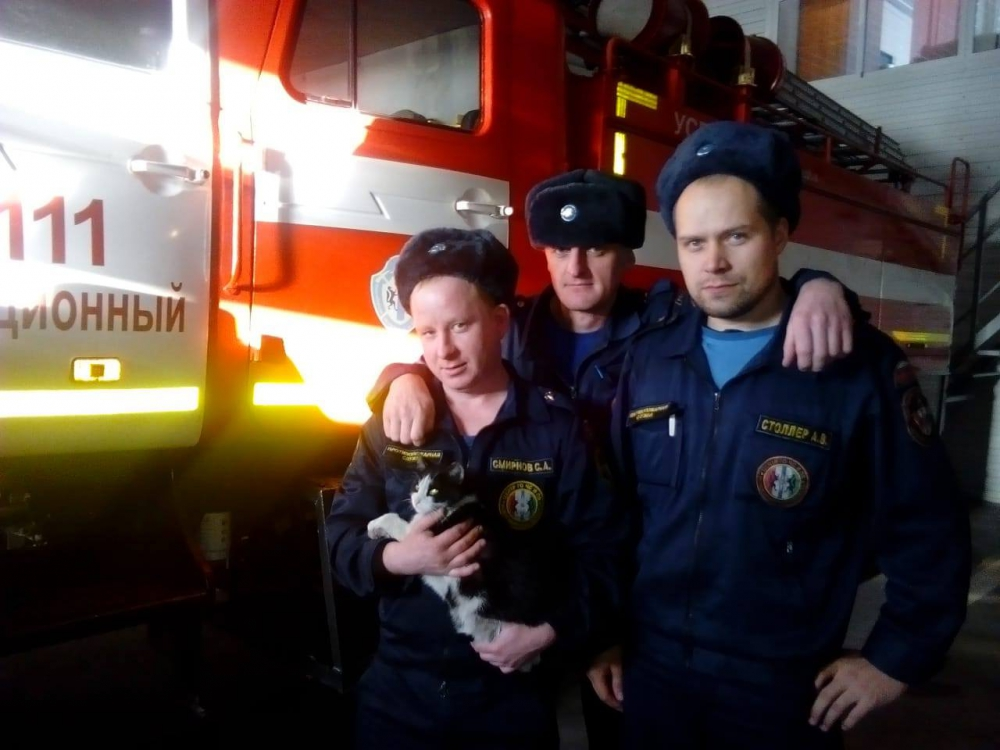 Спасенный кот Гидрант стал талисманом пожарных