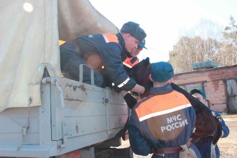 Работа спасателей в н.п. Черная речка Томского района во время паводка