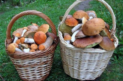 10 советов безопасного сбора грибов