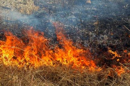 Профилактика природных пожаров - дело общее!