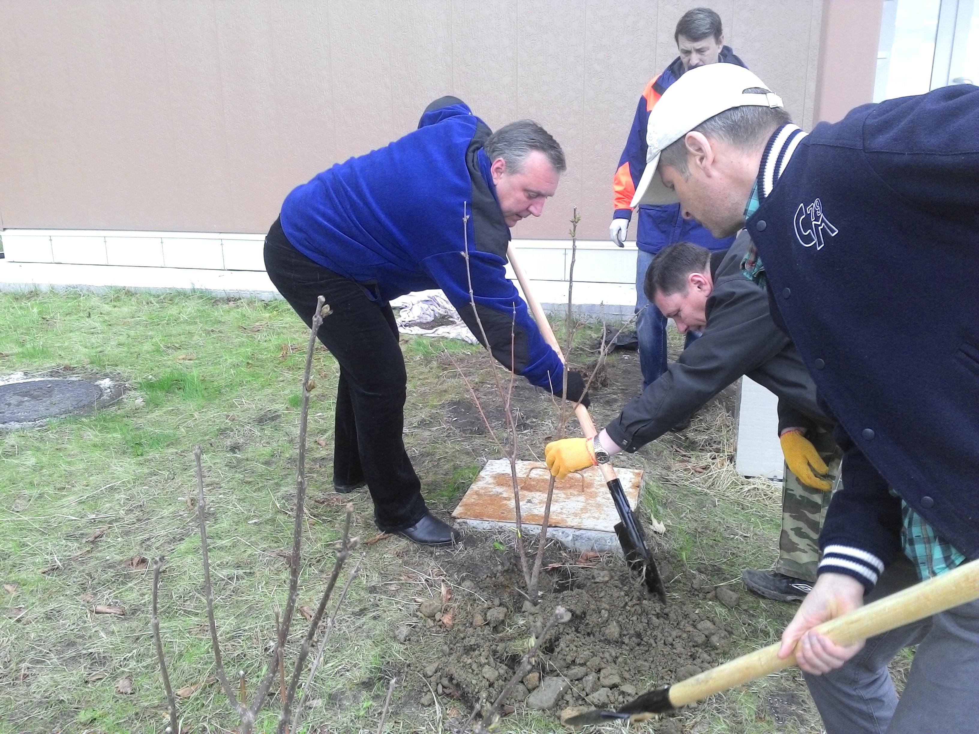 такие приняли участие в акции посади дерево пирог это отличное