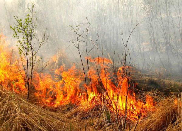 Лесной пожар (ролик МЧС России)