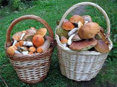Как определить съедобные и распознать ядовитые грибы