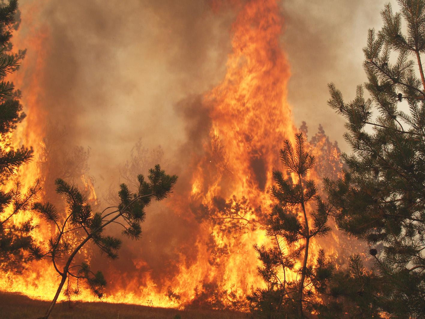 Как не допустить пожара в лесу