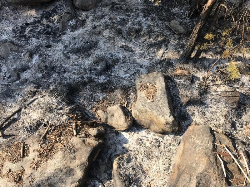 Возможные виновники лесного пожара в Шелеховском районе установлены межведомственной оперативной группой