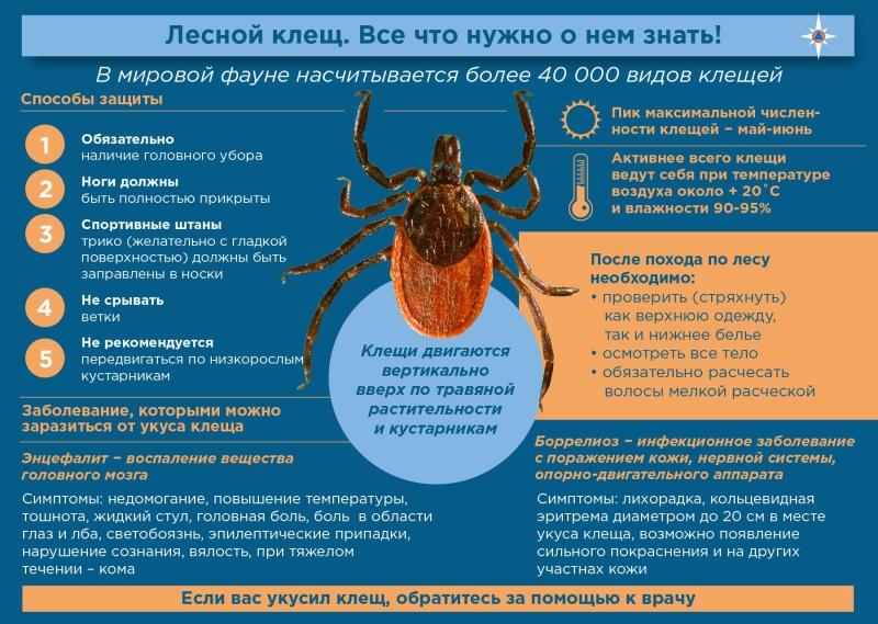 Как уберечься от клещей: рекомендации от МЧС России