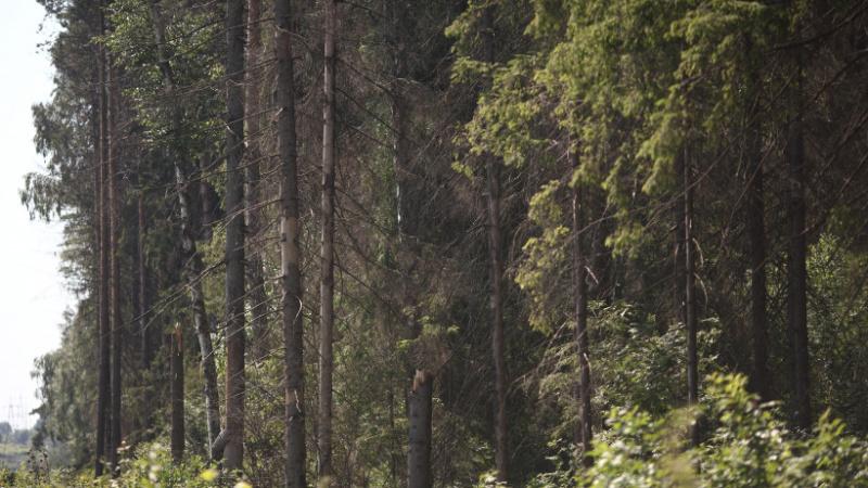 Система-112 Московской области напоминает правила нахождения в лесу