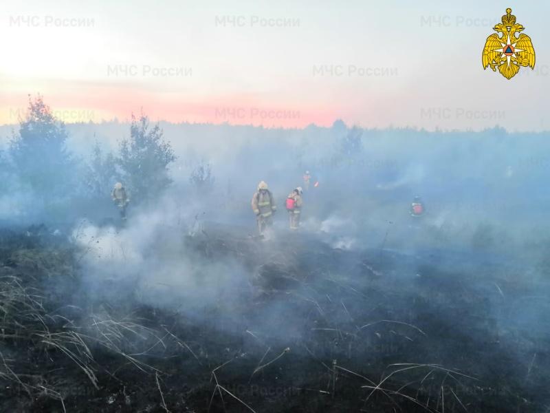 Более 100 человек ликвидировали низовой лесной пожар в Тольятти