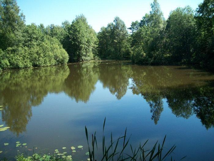 В Урмарском районе утонул 46-летний мужчина