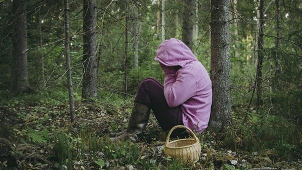Лес ошибок не прощает