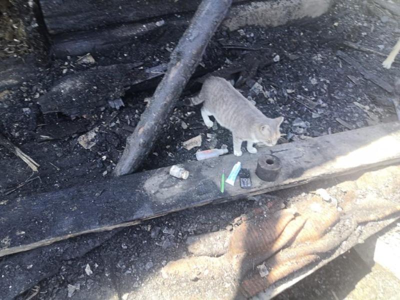 Кошка спасла спящих хозяев при ночном пожаре дома в п. Заречье