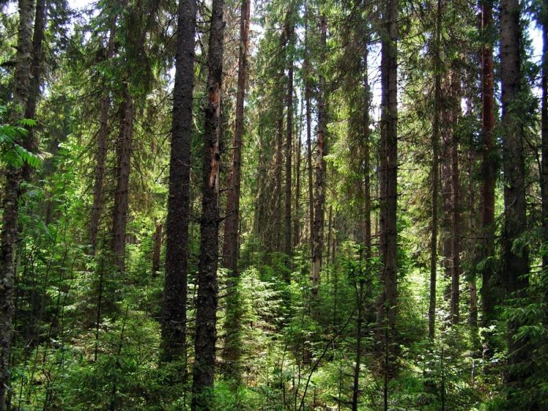 Продолжается поиск пропавших в вологодских лесах