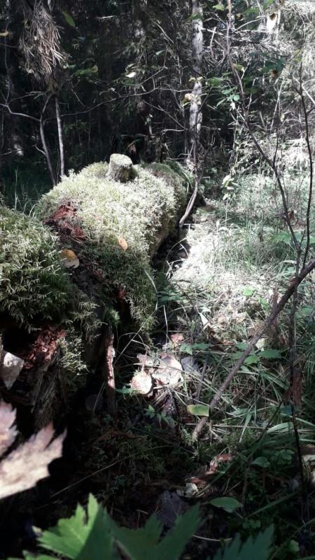 В Вологодской области идет поиск трех человек