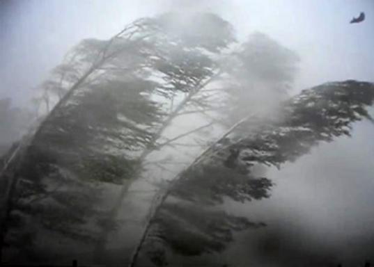 На юге Тюменской области ожидается сильный ветер