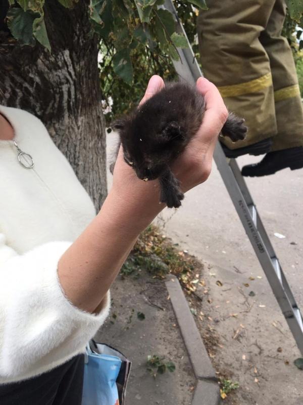 Брянские огнеборцы помогли спасти котенка, застрявшего на высоком дереве
