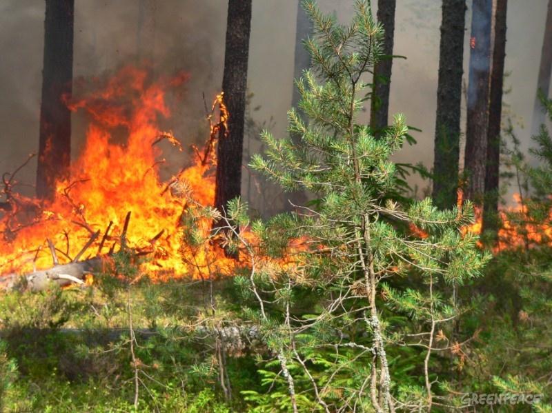 На территории пяти муниципальных образований Оренбургской области на 17 октября 2020 года прогнозируется пятый класс пожарной опасности